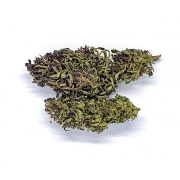 Susz CBD Purple Haze